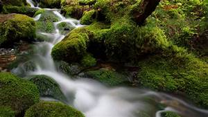 Waterfall, Stream, In, Between, Green, Algae, Covered, Rocks, 4k, Hd, Nature, Wallpapers