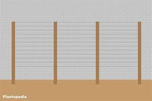 Weinspalier Freistehend Bauanleitung : weinspalier selber bauen solide rankhilfe f r weinreben ~ A.2002-acura-tl-radio.info Haus und Dekorationen