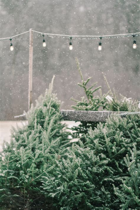 holiday tree farm shopper s diary a tree farm in maine gardenista