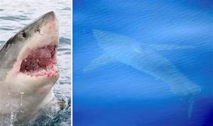 Majorca: The great fright shark alert | World | News ...