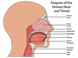 Printable Nose Diagram