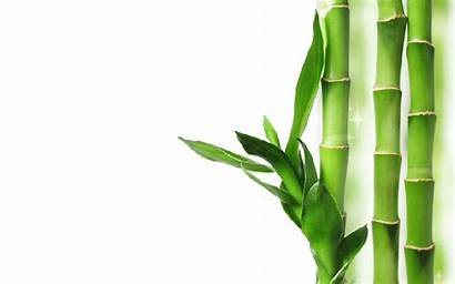 Bamboo Transparent Background Massage Bambu Icon Sticks