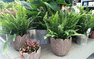 Plante D Intérieur Haute : plantes d interieur ~ Dode.kayakingforconservation.com Idées de Décoration