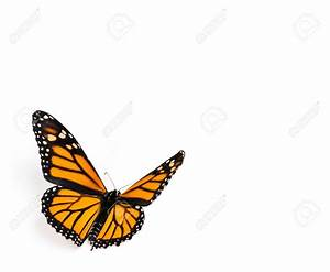 Monarch Butterfly clipart butterfly fly - Pencil and in ...