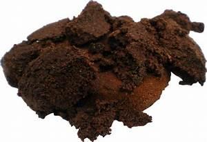 Dünger Selber Machen : d nger aus kaffeesatz enth lt viele n hrstoffe pflanzen selber machen garten pflanzen ~ Watch28wear.com Haus und Dekorationen