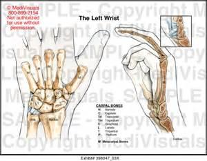 Left Wrist Bone Anatomy