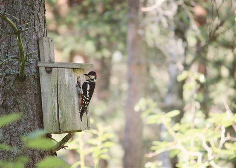 adding nesting material  bird houses