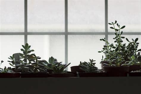 indoor garden planning tips t5 grow light fixtures