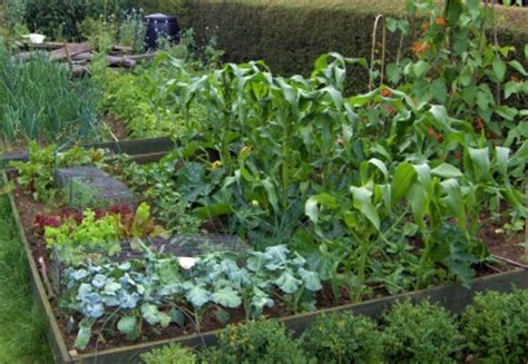 plan now for crop rotation in your vegetable garden msu