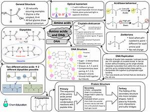 Revision Mindmap For Aqa A Level Amino Acids And Dna  New