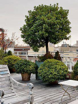 arbre en pot pour la terrasse idees jardin jardins terrasse jardin y d 233 co exterieur jardin