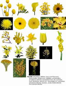Information about types of yellow flowers names yousensefo flower information modern petals blog mightylinksfo