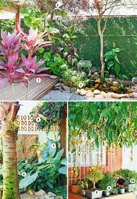 tropical garden plants list 204 best images about tropical beach garden on pinterest gardens pools and tropical
