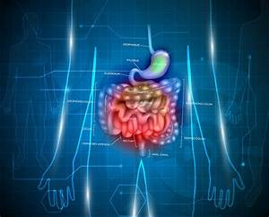 What Are Leaky Gut Disorders  How To Heal Them