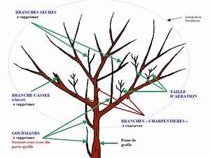 Tailler Un Citronnier : blog des agrumes la taille ~ Melissatoandfro.com Idées de Décoration
