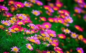 Awesome Hd Beautiful Flowers Wallpapers Full Pics ...