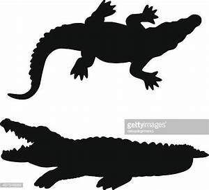 Alligator Stock Illustrations And Cartoons | Getty Images