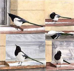 Elster Vogel Vertreiben : bild elster vogel natur malerei von ingemar bei kunstnet ~ Lizthompson.info Haus und Dekorationen