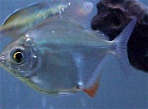 Internal Parasites In Fish Treatment
