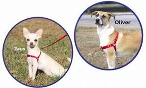 Easy Walk Harness Instructions | Get Free Image About ...