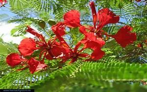 Bilder Blumen Kostenlos Downloaden : kirche bild kommunion bilder zum ausmalen und ausdrucken chainimage ~ Frokenaadalensverden.com Haus und Dekorationen