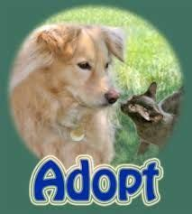 images  ontario canada animal shelters