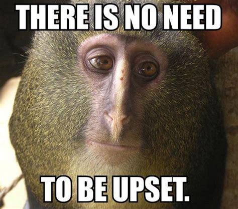 Meme Monkey - monkey face meme 28 images monkey memes man i love cats 47 very funny monkey memes images