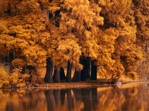 Autumn Wallpapers 4k by Autumn Fall Nature 4k Hd Nature 4k Wallpapers Images