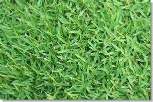 lawn grass scientific name carpetgrass seed 1 lb