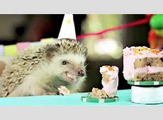 So süß feiern kleine Tiere Geburtstag Video