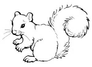 Cute Squirrel Coloring Pages
