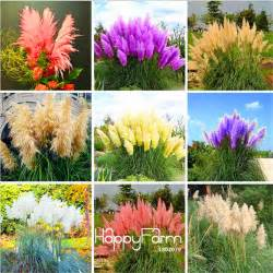 aliexpress buy new seeds 2017 pas grass seed patio and garden potted ornamental plants