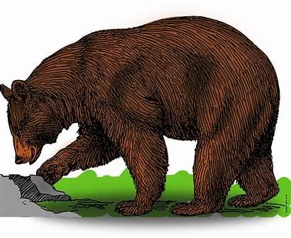 Market Bear Bull Alpha Aqr Equity Short
