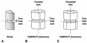 Rotational Symmetry In Nmnat Quaternary Structures  A