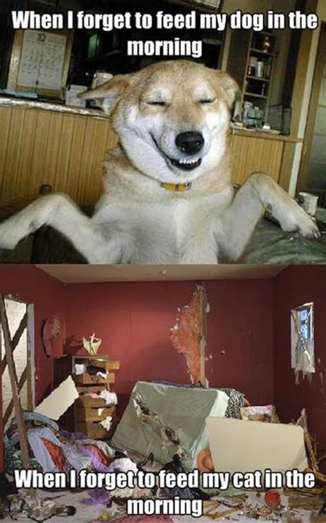 pictures   day top  funny internet dog memes