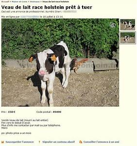 Bon Coin Pays De La Loire : veau tuer animaux pays de la loire best of le bon coin ~ Gottalentnigeria.com Avis de Voitures