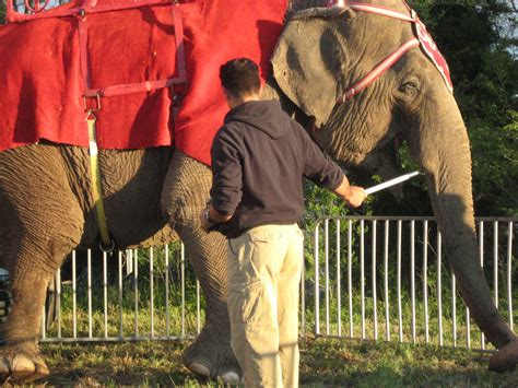 circuses  road shows