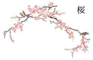japanese cherry blossom design drawn sakura blossom traditional pencil and in color drawn sakura blossom traditional