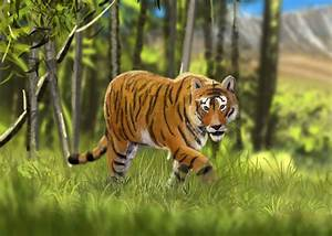 The gallery for --> Siberian Tiger Running