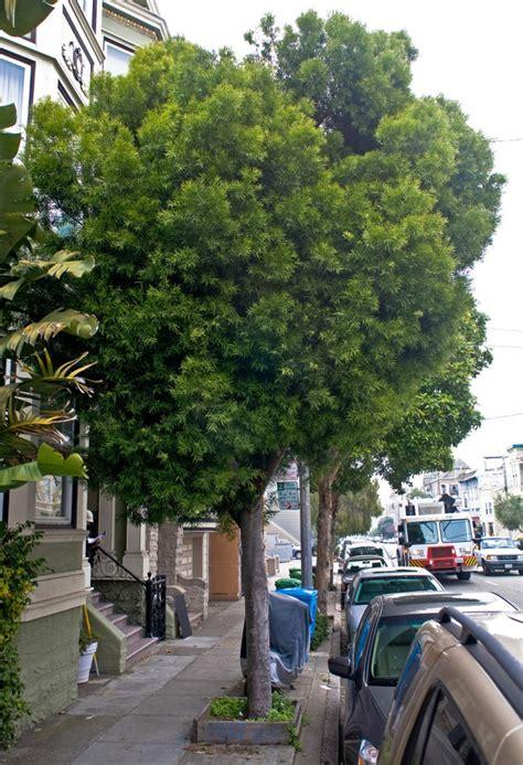 fern pine friends   urban forest