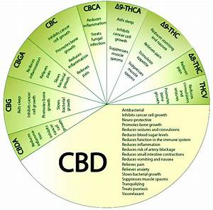 what is cbd in cannabis oil