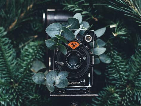 outstanding film photographers  instagram  follow