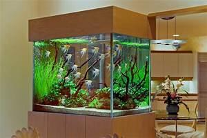 Aquarium Gestaltung Bilder : das heimische aquarium aufpeppen variationen und ideen ~ Lizthompson.info Haus und Dekorationen