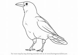 Learn How to Draw an American Crow (Birds) Step by Step ...