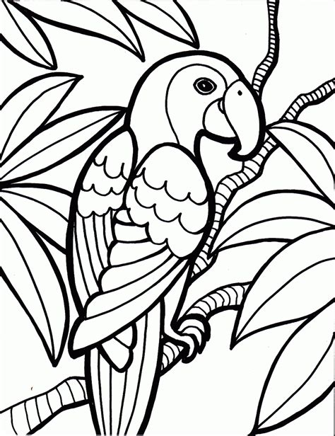 bird coloring pages    print