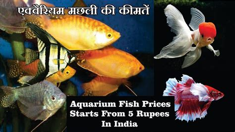 aquarium fish pictures  names  bestpictureorg