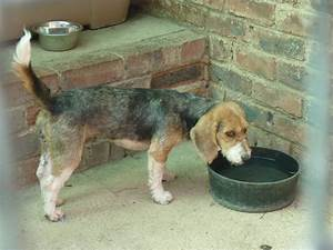 Dogs Up For Adoption Spca Alberton My Alberton
