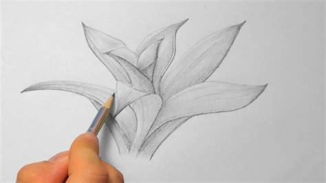bromelie zeichnen im zeitraffer bromeliad drawing