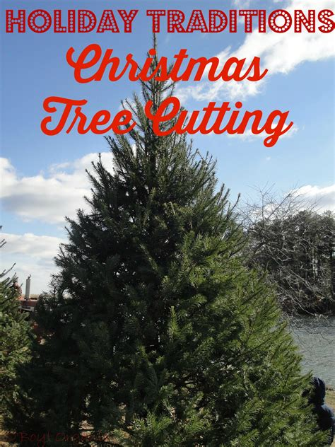 holiday traditions christmas tree cutting at coleman tree farm