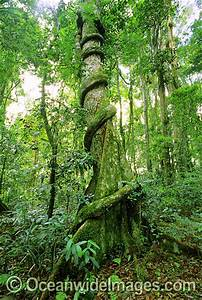 The gallery for --> Names Of Rainforest Trees